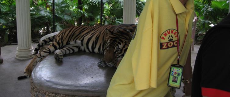 tigerpasser