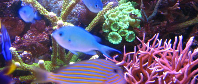 reef001